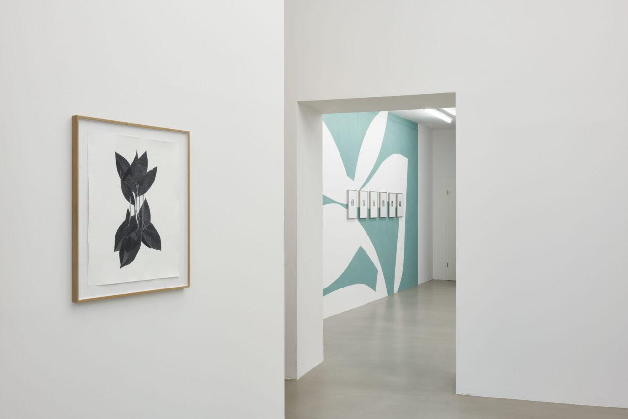 Frauke Dannert – botanicals