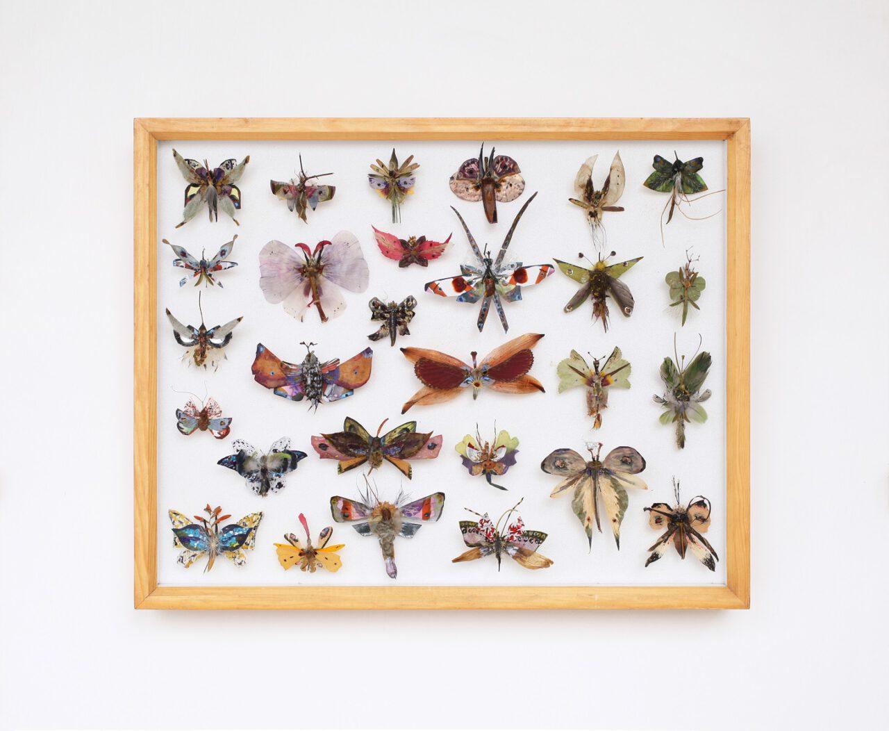 Ann-Kristin Hamm – Schmetterlingskasten 12