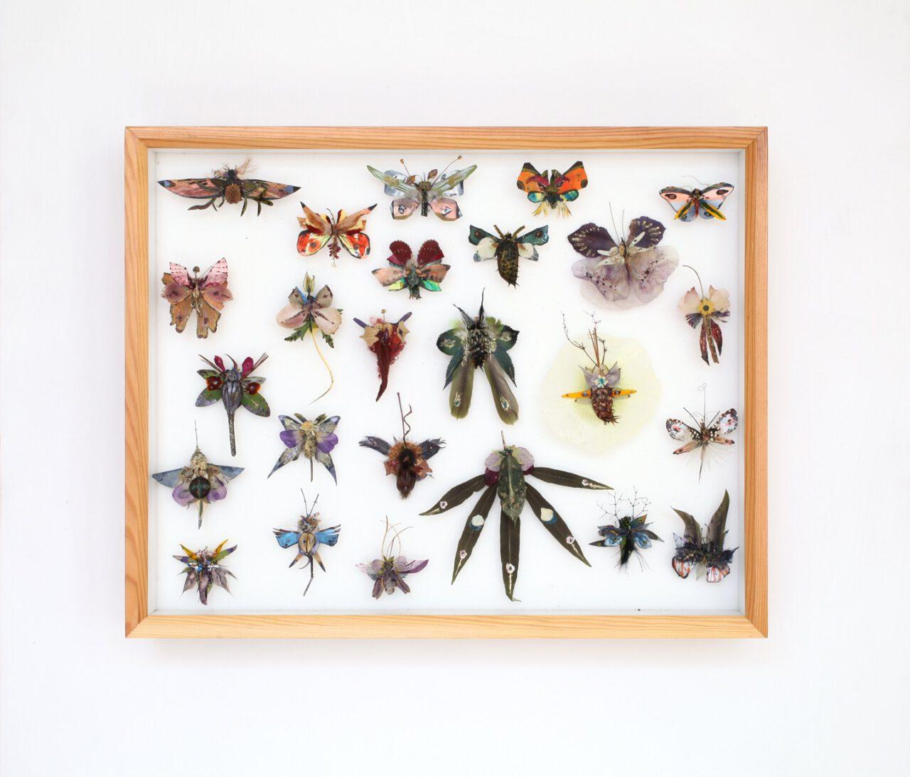 Ann-Kristin Hamm – Schmetterlingskasten 13